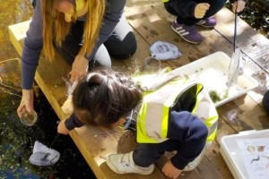 Child and teacher pond dipping